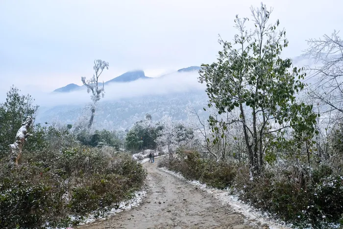"""Video: Tourists excited at snowy """"Europe-like"""" scene in Vietnam Northern mountains"""