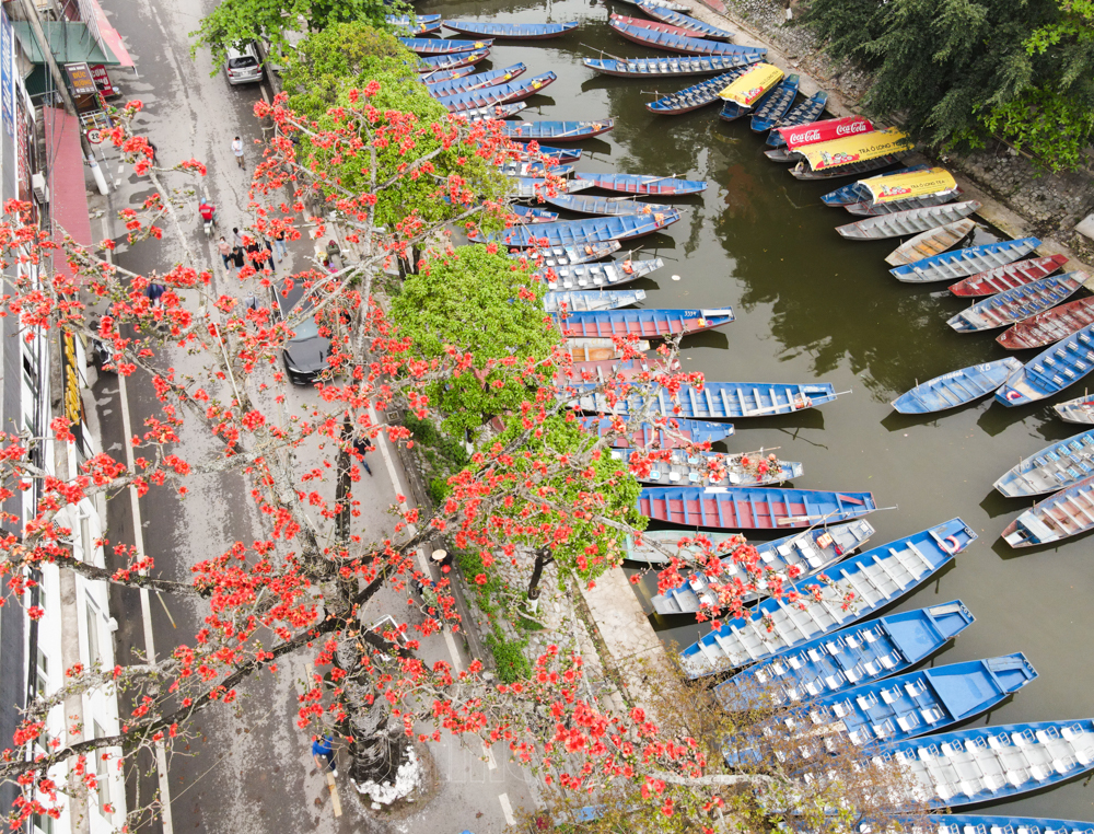 In photos: Red silk cotton flowers adorn beauty of Huong (Perfume) Pagoda