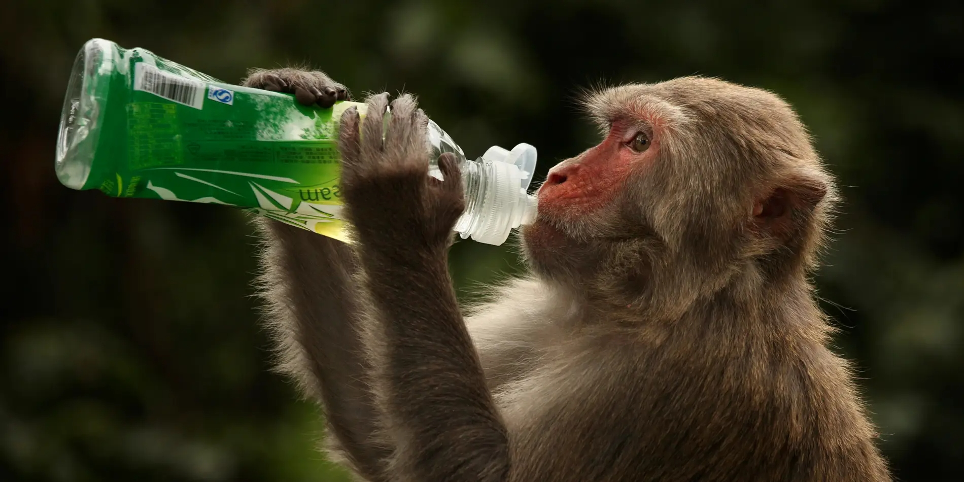 Oxford-developed vaccine appears to shield monkey from coronavirusinfection