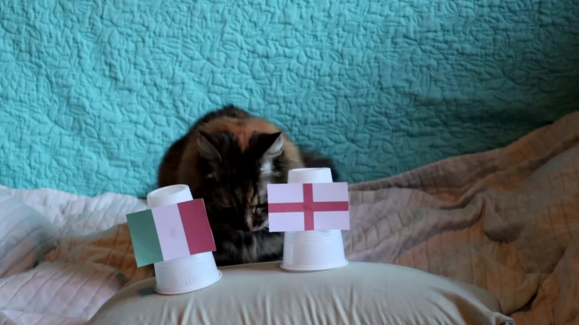 Cats Predict Italy Win Over England at EURO 2020 Final - Video