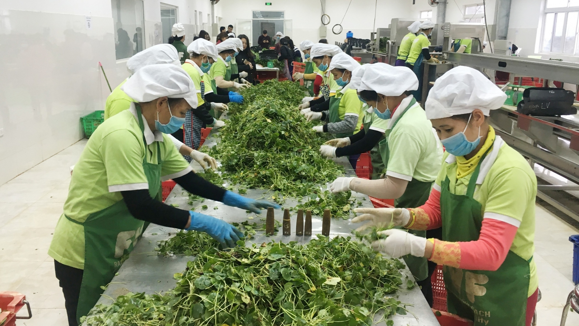 Vietnamese farming exports reach US$26.1 billion over the past eight months